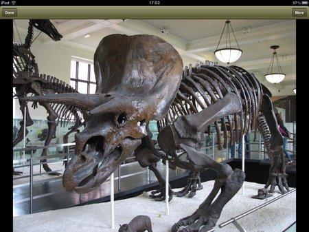 app_photo_britannica_kids_dinosaurs_8.jpg
