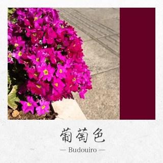 app_photo_kyotocamera_4.jpg