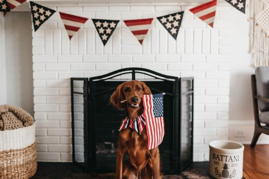 dress up your dog for 4th of July