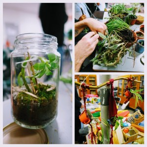 Montage photo de terrariums