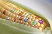 الأغذية المعدّلة وراثيا: بين المنافع والمخاطر