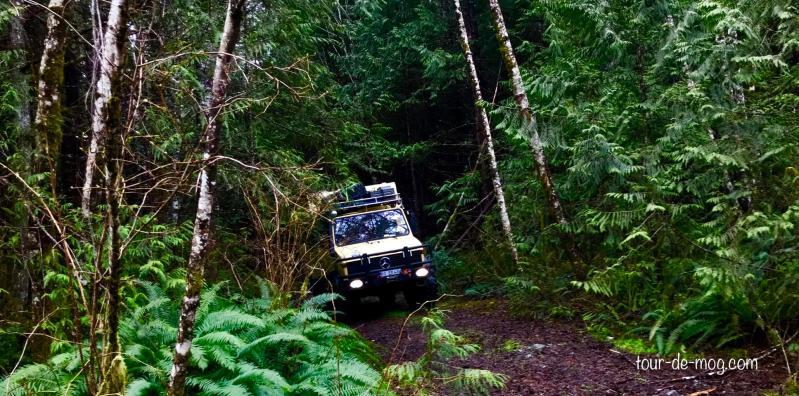 Regenwaldexpedition-Vancouver-Island
