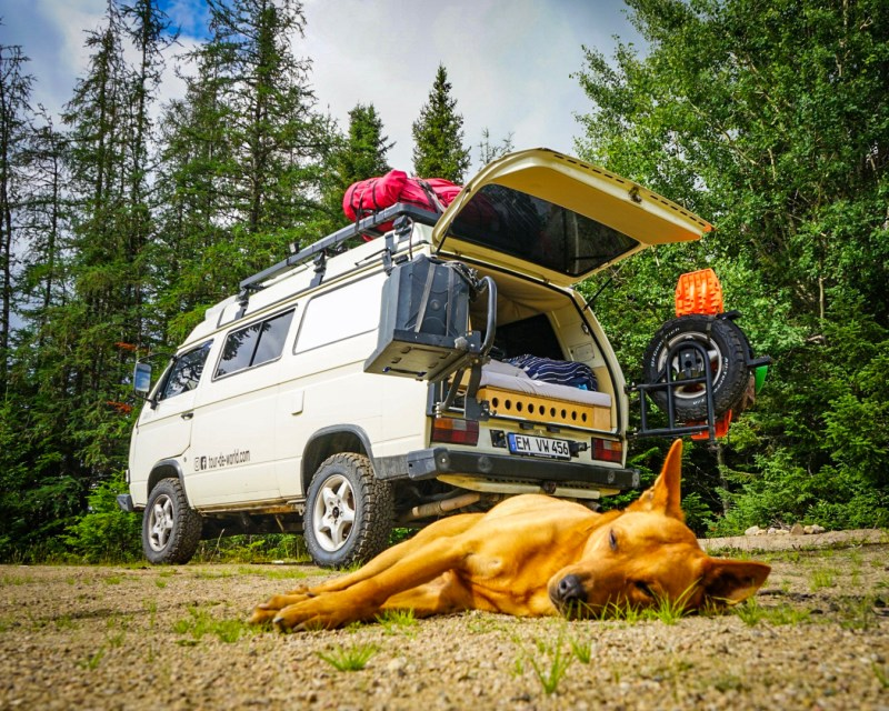 labrador_roadtrip_hund