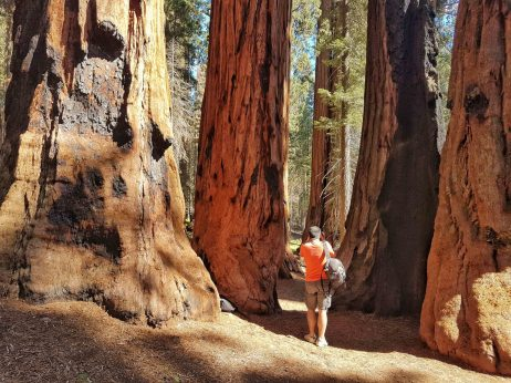 visite parc sequoia