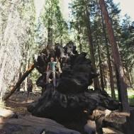 photo de sequoia