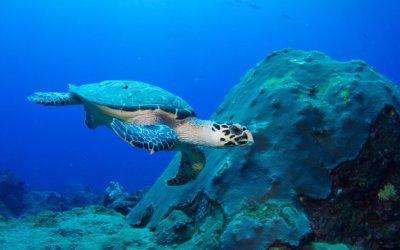 جزر السلاحف في ولايه صباح ماليزيا