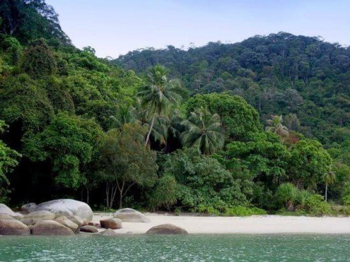 حديقة القرود في جزيرة بينانج