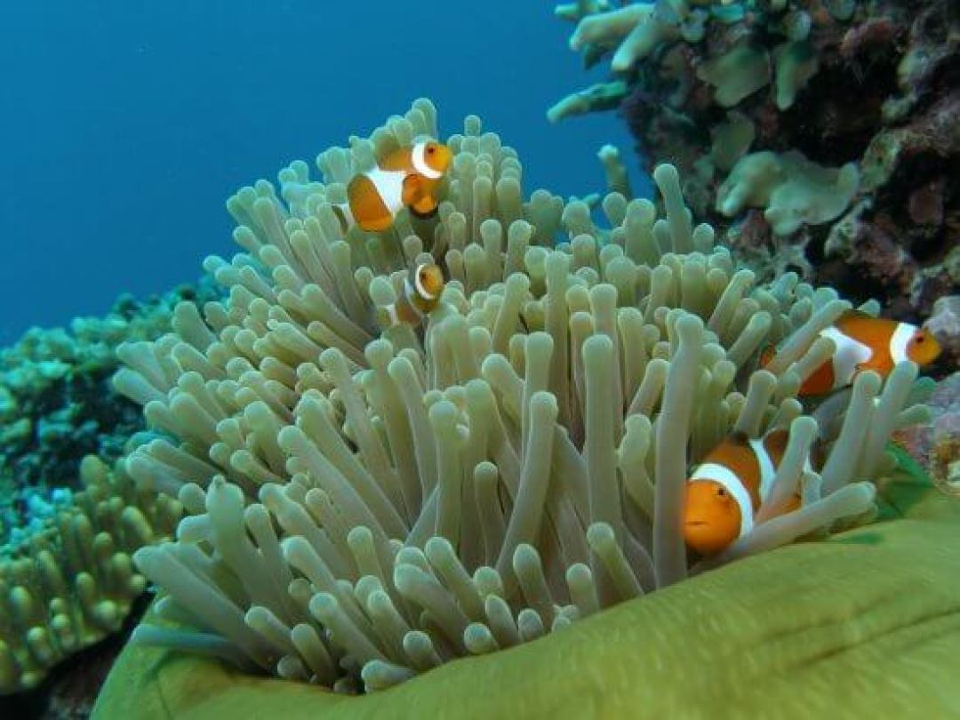 جزيرة تيومان ماليزيا Tioman Island