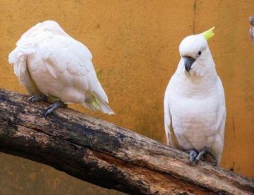 حديقة الطيور في لنكاوي BIRD PARADISE