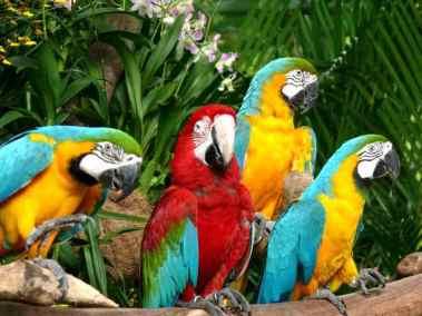 حديقة الطيور في كوالالمبور Bird Park