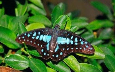 حديقه الفراشات في كوالالمبور Kuala Lumpur Butterfly Park