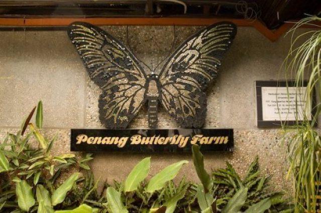 penang-butterfly-farm