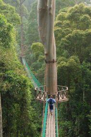 Rainforest-Canopy-Walkway-2