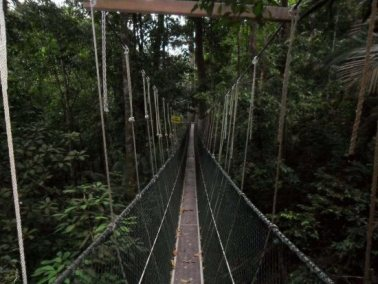 canopy-walk-penang-national-park-malaysia