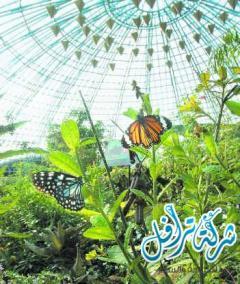 حديقة الفراشات