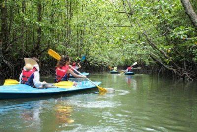 mangrove-kayak