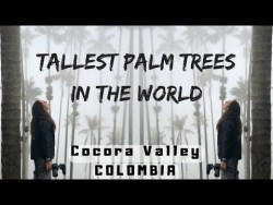 TALLEST Palm Trees in the WORLD – Colombia Travel Vlog Ep 6 – Cocora Valley / Salent ...