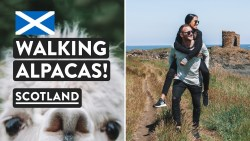 Scotland's Stunning Coast and Baby Alpacas! | Elie Beach & Lighthouse | Fife Scotland