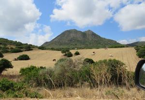 Campi mucche Sardegna