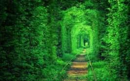 Тунель Кохання, селище Клевань, Рівненська область