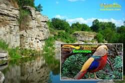 Золотий фазан, буцький каньйон