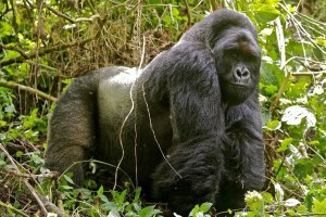 Tour Congo safaris