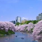 WHAT TO SEE AND DO IN TOKYO