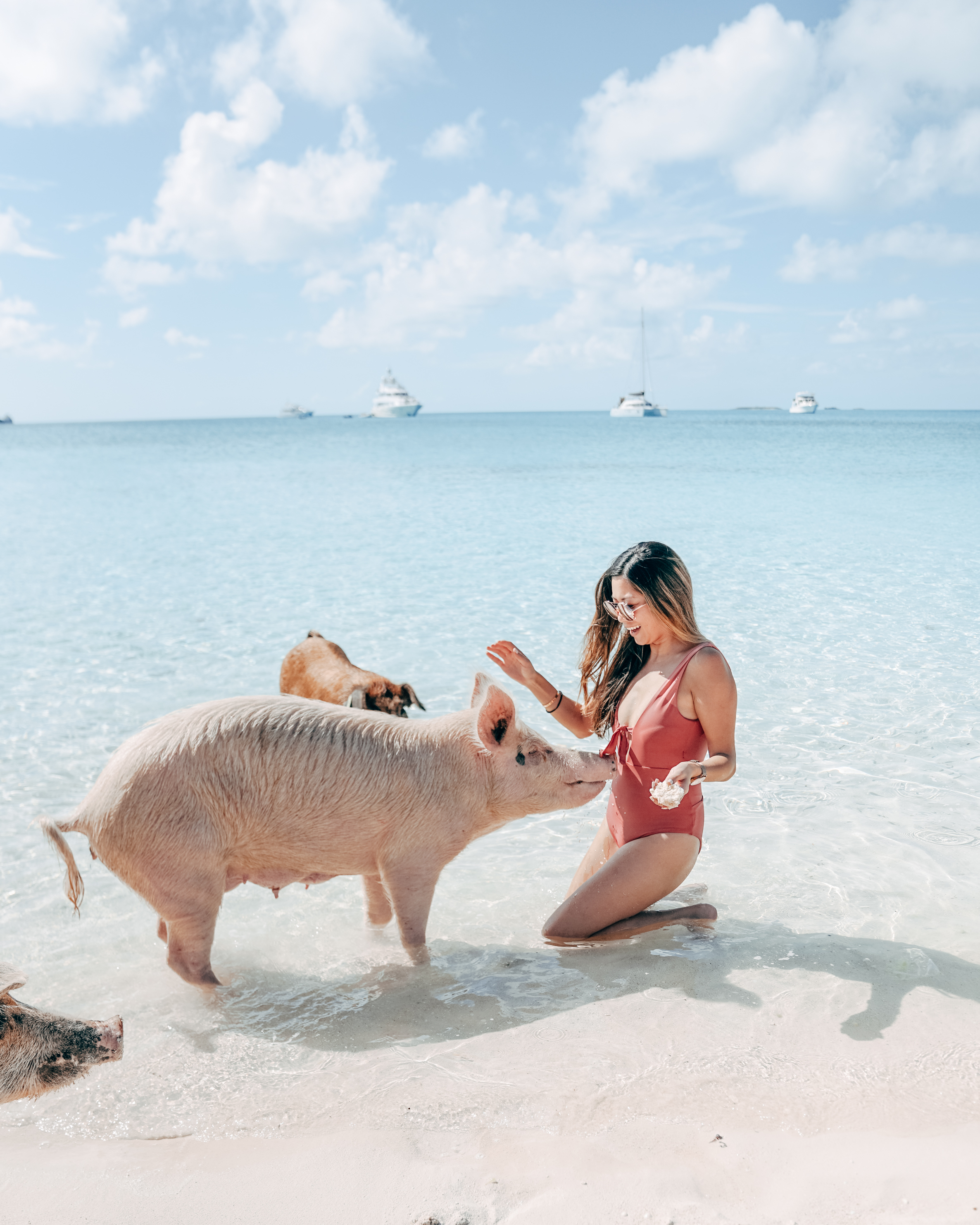 Bucket list experiences in Exuma - swimming pigs