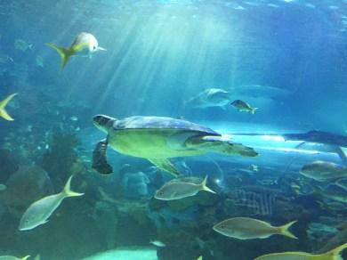 2018-08-22 - Aquarium Toronto-4