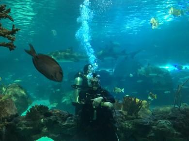 2018-08-22 - Aquarium Toronto-6