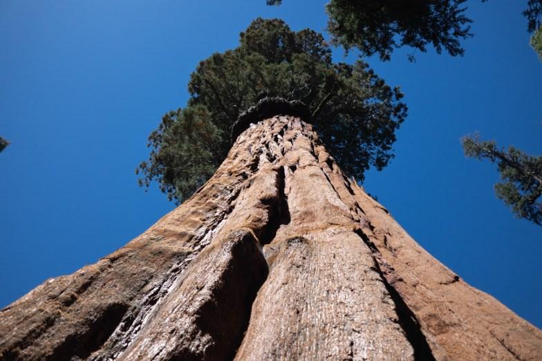 2018-09-20 - Sequoia Park-15