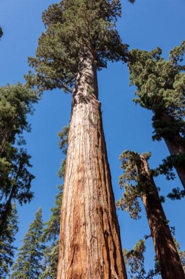 2018-09-20 - Sequoia Park-5