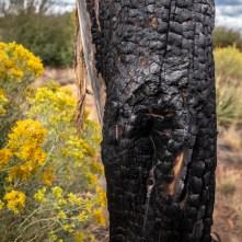 2018-09-O5 - Mesa Verde-10