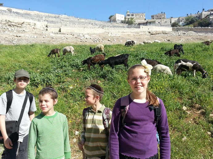 Goats in the Kidron Valley below the graves.