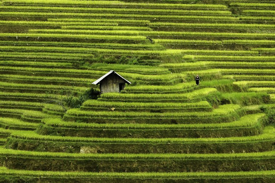 Rice terraces hoang su phi 1 15 Best things to do and see in Ha Giang