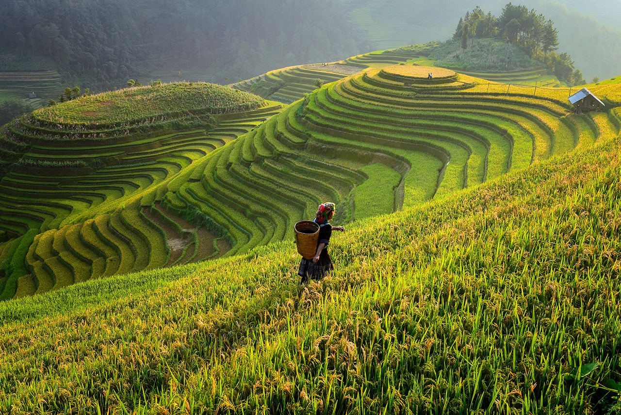 Taxi to hanoi airport Tours By Locals Vietnam