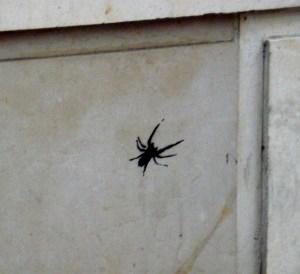 spider stencil spray paint