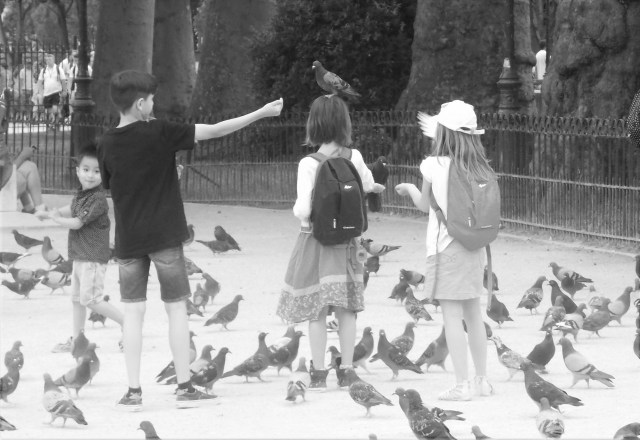 Pigeons in Paris