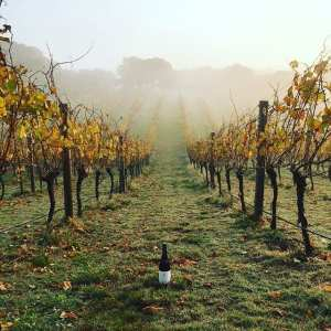tourism-guide-australia-wineries-near-melbourne
