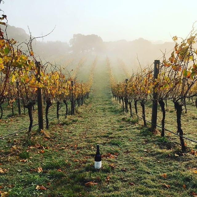 tourism-guide-australia-wineries-near-melbourne
