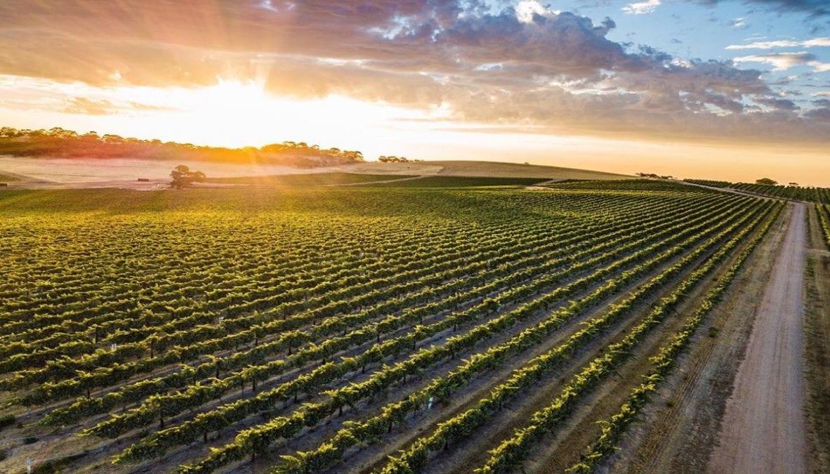 seppeltsfield-wineries