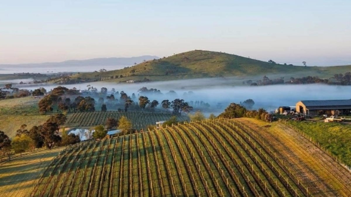 yarra-valley-wine-region-tourism-guide-australia