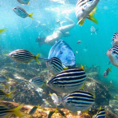 tourism-guide-australia-cabbage-tree-bay-aquatic-reservelbourne-australia