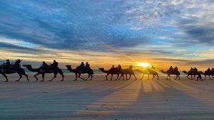 tourist-guide-australia-Sunset-camel-ride-cable-beach