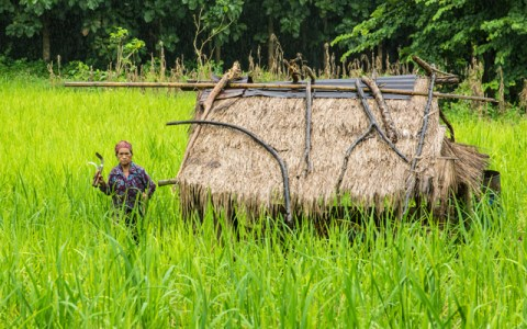 rice-farming-luangprabang-laos