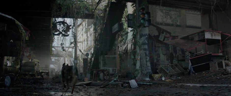 A run-down alley