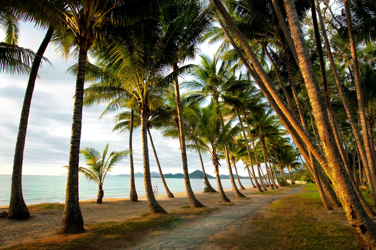 What Does Trip Advisor Say About Palm Cove Tourism Palm Cove