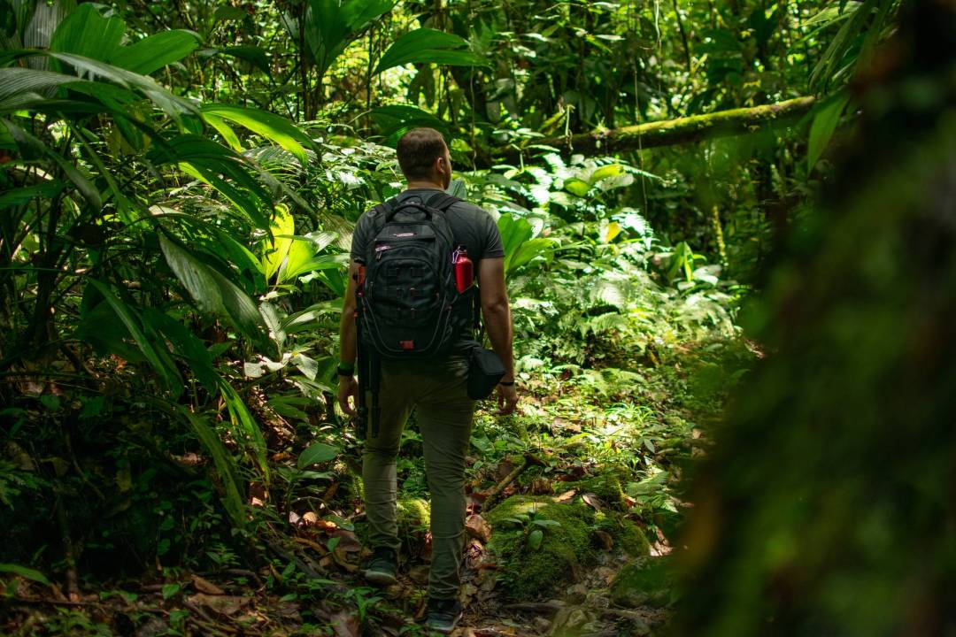 man carrying black backpack standing beside trees Ecotourism