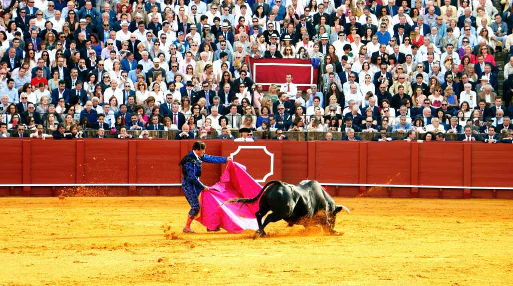 man people festival crowd facts about bullfighting