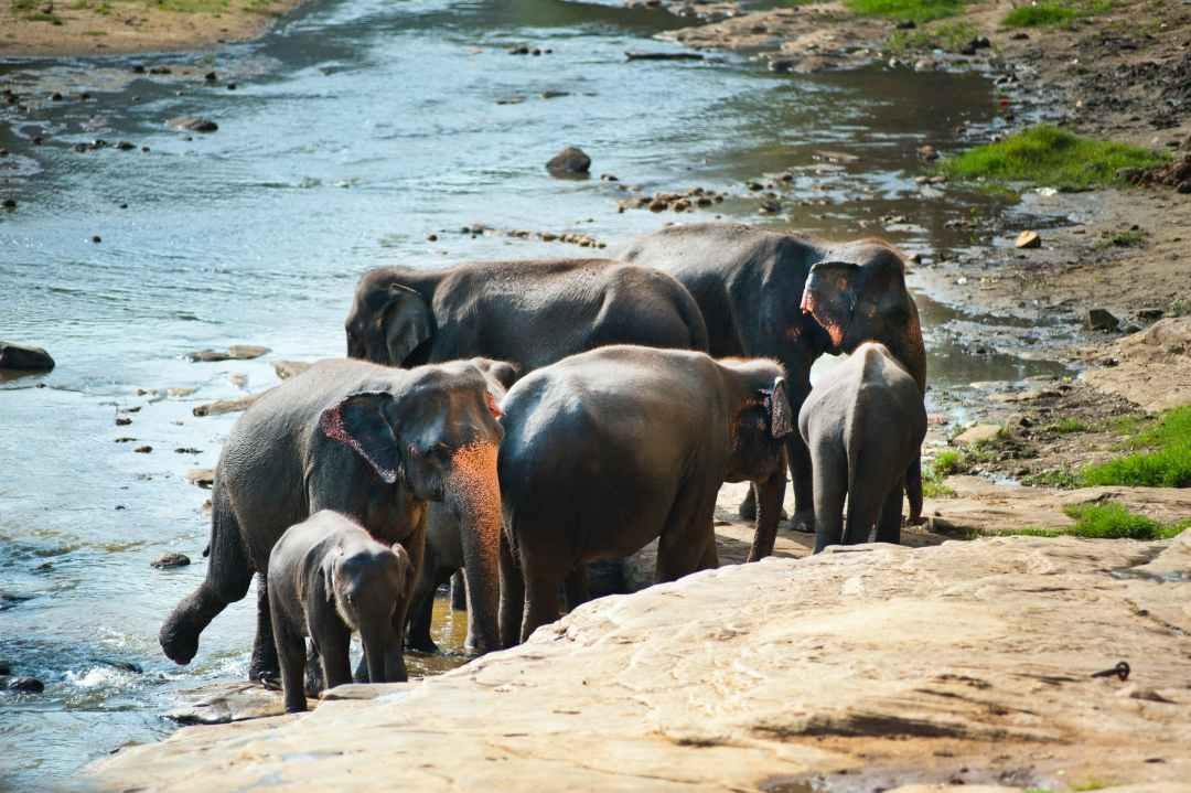 several black elephants ethical elephant sanctuaries in Thailand